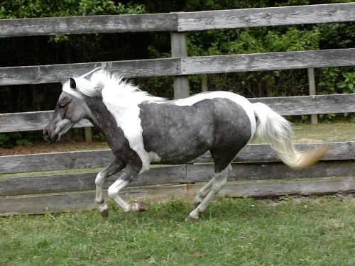 Horse N Donkey Breeding Horse Breeds - America...
